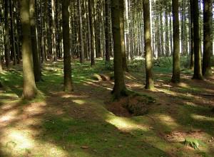 Een voorbeeld van Belleau Woods